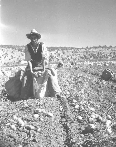 Picking belt, Braceros in Oregon Photograph Collection