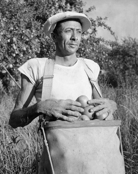 Man with sack of apples, Braceros in Oregon Photograph Collection
