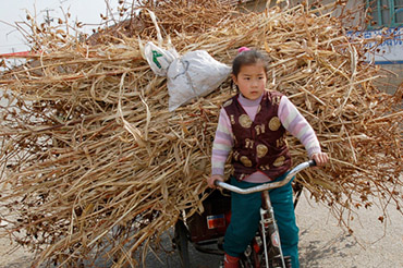Girl Hauling Straw on a Bicycle, ChinaVine