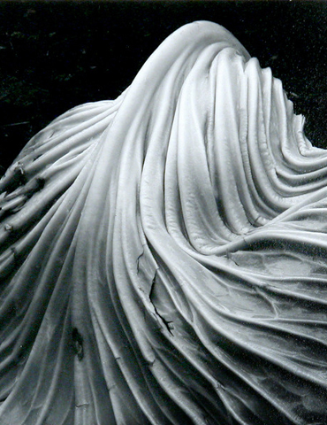Cabbage Leaf, 1931, Edward Weston, The Fairbanks Fine Arts Print Collection