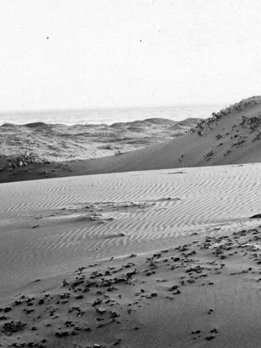 Sand Dunes at the Oregon Coast, ca. 1940, Frank Patterson Photographs
