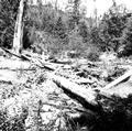 Upper Smith River filled with wood debris