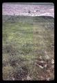 Closeup of grasses at Central Oregon Branch Experiment Station, circa 1965