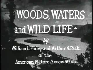 Woods, Waters, and Wildlife