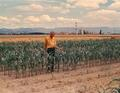 Art King in corn field