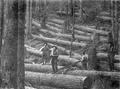 Four loggers with several downed trees