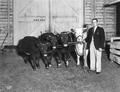 Cliff Conrad with Champion herd
