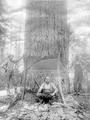 Three loggers next to tree with axes and two felling saws