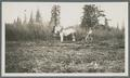Harvesting with horse drawn equipment