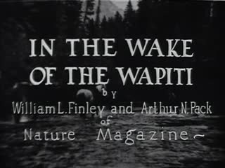 In the Wake of the Wapiti