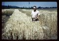 Dr. Wilson H. Foote in Benton spring barley and Zimmerman wheat, 1964