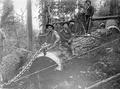 Three loggers on bucked and chained tree