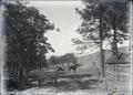 Woman in horse and buggy near cabin