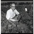 "Horticulturalist William A. ""Tex"" Frazier with bush beans"