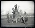 Horticulture students grafting a tree. Standing at far right is Professor George Coote.
