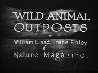 Wild Animal Outposts