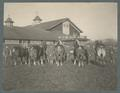 Draft horses inspection formation, circa 1910