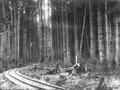 Logging railroad track in a forest