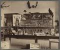 Interior view of the OAC Zoological Laboratory