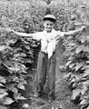 Boy in a pole bean field